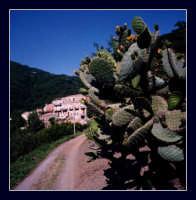 Montecaruso,frazione di Montagnareale.  - Montagnareale (1567 clic)