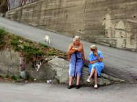 Gatti.  - Montagnareale (2936 clic)