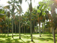 Museo Botanico Didattico  Parco delle Kentie . (2004)  - Riposto (3061 clic)