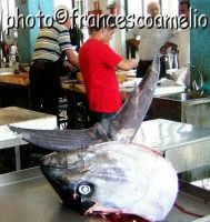 Mercato del pesce piscaria luogo d'incontro quotidiano fra Uomini & Pesci.(2oo5)  - Riposto (4158 clic)