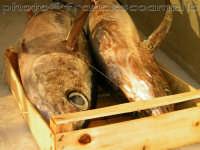 Pescato nel mare di Riposto,alalunghe.(2oo6)  - Riposto (5064 clic)