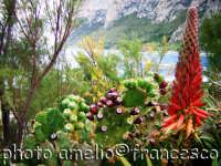 Macchia mediterranea spiaggia di Sferracavallo.(2oo5)  - Sferracavallo (3558 clic)