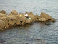 Pescatore. (2004)  - Torre archirafi (3742 clic)