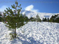 Neve. (2oo6)  - Linguaglossa (2489 clic)