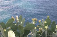 La bellissima isola Lipari.  - Lipari (3363 clic)