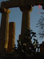 Valle dei Templi  - Agrigento (4482 clic)
