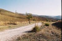 Il viaggio del Gattopardo. Campagne ennesi - zona Contrada Granci. ENNA Alessandro La Vigna
