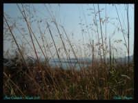 Soggetto: Vista di Porto Empedocle dal Pino di Pirandello Fotocamera: FujiFilm FinePix A330 Software: Adobe PhotoShop CS2 Luogo: Porto Empedocle (AG) Data: 15 Luglio 2oo6 Ora: 18:o5  - Porto empedocle (4405 clic)