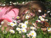 Un fiore tra le pratoline... (pasquetta 2005)   - Montagnareale (3792 clic)