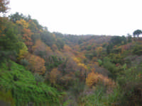 autunno  - Montagnareale (2303 clic)