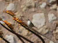 Simpatico, Uccellino  - Alcamo (2358 clic)