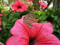 Una graziosa farfallina     - Alcamo (1465 clic)