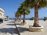 Per le vie di Castellammare   - Castellammare del golfo (127 clic)