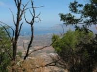 Panorama: dal monte Bonifato  - Alcamo (677 clic)