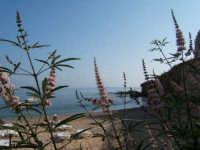 Anche i fiori amano il mare  - Castellammare del golfo (872 clic)