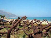 Ancore al vento   - Castellammare del golfo (1130 clic)