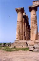 tempio di selinunte  - Selinunte (2576 clic)