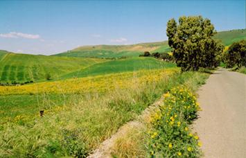 paesaggio nei pressi di barrafranca - BARRAFRANCA - inserita il