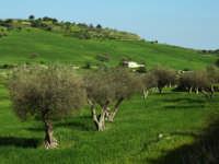 paesaggio  - San giacomo (3665 clic)