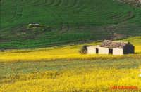 Centuripe (EN) - Forme e colori 16A  - Foto di Giuseppe Accordino  - Centuripe (3282 clic)