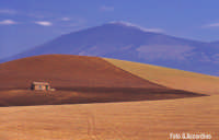 Forme e colori 14A- Campagna presso Franchetto - Foto di Giuseppe Accordino  - Catania (3028 clic)