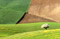I colori dei campi  - Enna (7892 clic)