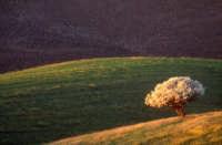I colori dei campi  - Enna (8303 clic)