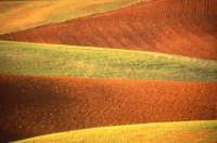 Forme e colori dei campi  - Paternò (9781 clic)