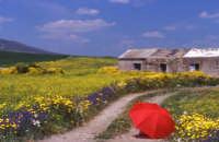 Paesaggio primaverile  - Ramacca (24890 clic)