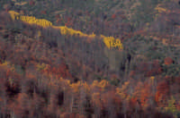Autunno sull'Etna 1 - Foto di Giuseppe Accordino  - Zafferana etnea (2852 clic)