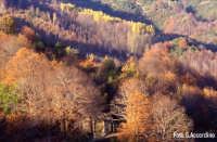 Autunno sull'Etna  - Foto di Giuseppe Accordino  - Zafferana etnea (3476 clic)