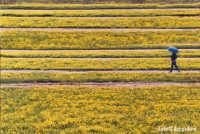 Primavera lungo il fiume Simeto-ponte primo sole - foto di Giuseppe Accordino  - Catania (4789 clic)