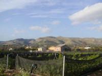 Azienda agricola Lumaca di Avola  - Avola (2072 clic)