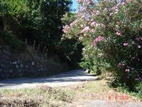 strada per il paese  - San salvatore di fitalia (4031 clic)