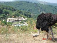 Agriturismo  - San piero patti (3393 clic)