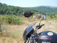 Agriturismo................Passione Ducati  - San piero patti (3851 clic)