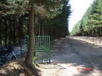 Ippodromo   - Castell'umberto (3878 clic)