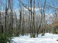 Castagneto (fatta il 12/02/2005) So la strada che parte dal santuario di S. Alfio e va verso su, ma non il nome del luogo.   - Trecastagni (2389 clic)