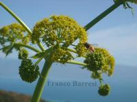Fauna e flora nizzarda.   - Nizza di sicilia (2734 clic)