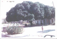 Piazza Col.Interdonato e il grande albero.  - Nizza di sicilia (6963 clic)