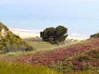 Uno scorcio della spiaggia di Torre Salsa  - Agrigento (2983 clic)