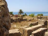 resti di case nella cittadella di selinunte  - Selinunte (2601 clic)