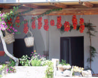 Pomodori sospesi  - Alicudi (8606 clic)