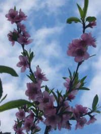Primavera PALERMO Aldo Noto