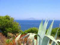 Attraverso la folta macchia mediterranea si scorge il mare e in lontananza Favignana.  - Levanzo (6149 clic)