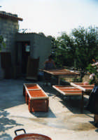 Preparazione delle conserve di pomodoro al sole. SCICLI Davide Militello