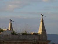 Gazze sull'orologio civico di San Matteo. SCICLI Davide Militello