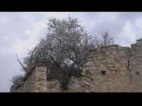 Albero di mandorlo in fiore sopra il tetto della cupola del 1400 del convento di Sant'Antonino. SCIC
