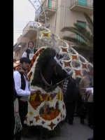 Cavalcata di San Giuseppe a Donnalucata 12 marzo 2006. Cavallo bardato con fiori di violaciocca (bba