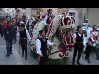 Cavalli bardati con fiori di violaciocca (BALUCU)per la Cavalcata di San Giuseppe, cavalcata che aff